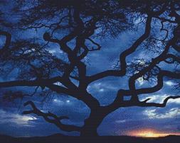 Nature's Finest No. 36 Cross Stitch Pattern Tree Silhouette